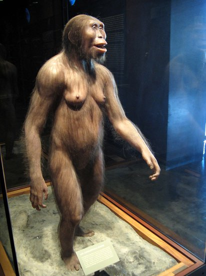 A reconstruction of Lucy