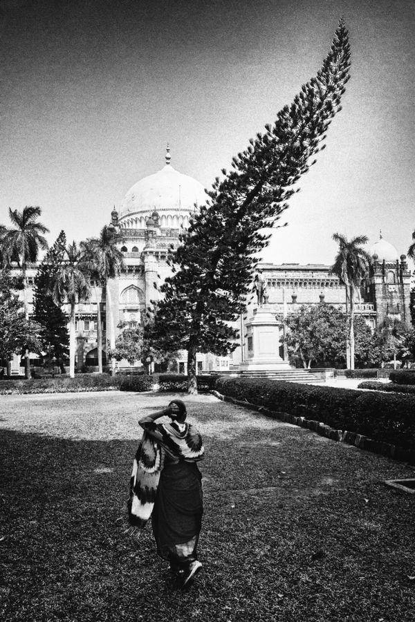Winding tree, Mumbai, 2020. thumbnail