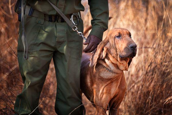 Big Life Foundation Dog Security Team Bloodhound Bone thumbnail