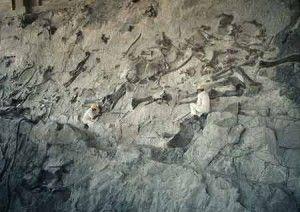 20110520083229DNM-quarry-300x212.jpg