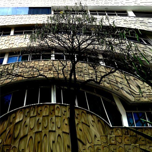 Dry Tree thumbnail
