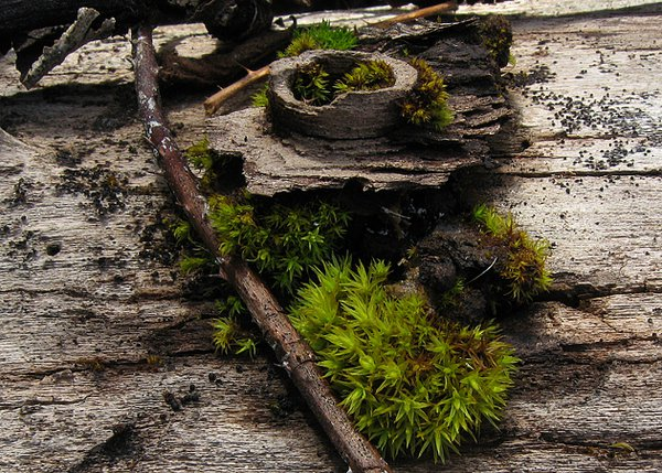 Knot and moss on old log. thumbnail