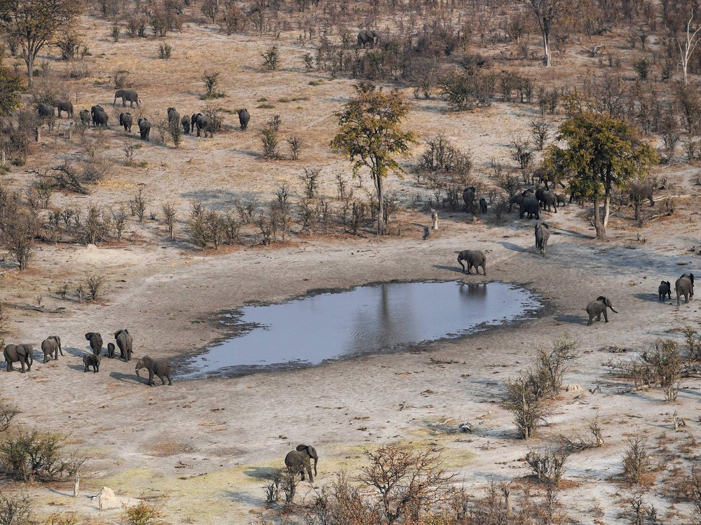 Aerial shot of elephants roaming near a waterhole in the plains of the Chobe district