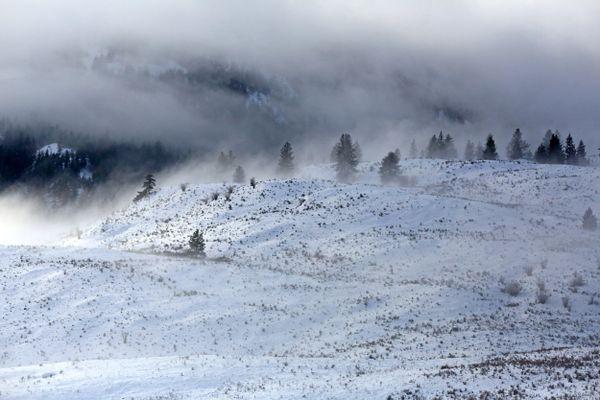 Winter fog over grassland thumbnail