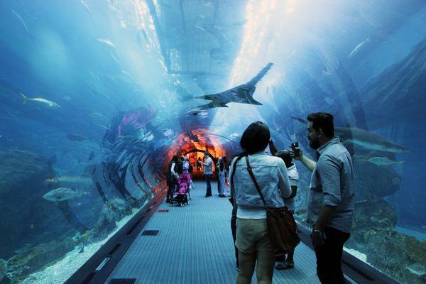 Dubai Aquarium thumbnail