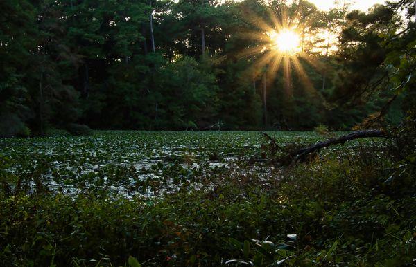 Mirror Lake Sunburst thumbnail