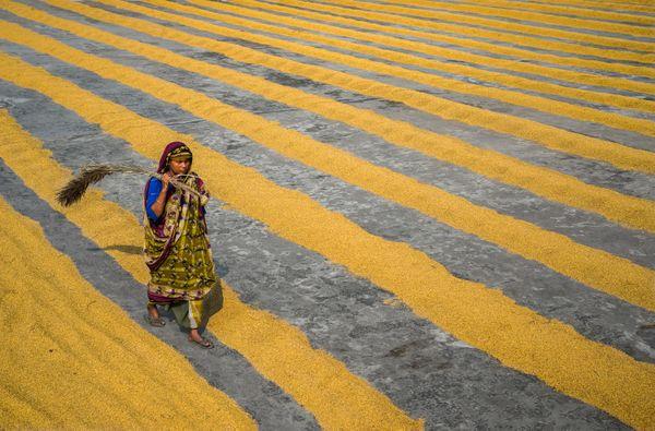 Yellow Carpet  thumbnail