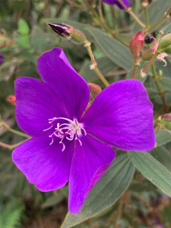 Purple Bloom thumbnail