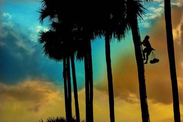 Life of palm farmers thumbnail