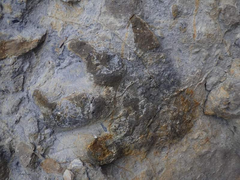 Trove of Well-Preserved Dinosaur Footprints Unearthed Along Sussex Coast