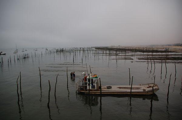 allevamento di ostriche - bassa marea a Cap Ferret thumbnail