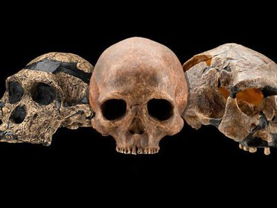 In the past ten years, we've found fossils that widen both the geographic and time range of several early human species.