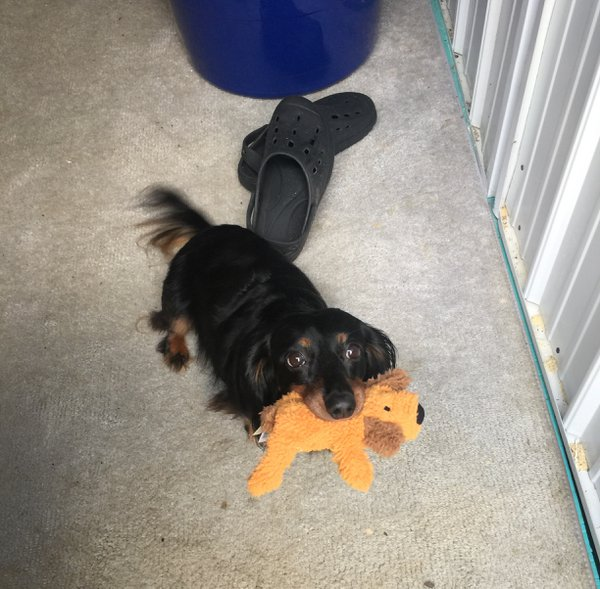Sweet dog got a new toy and will not put it down! thumbnail