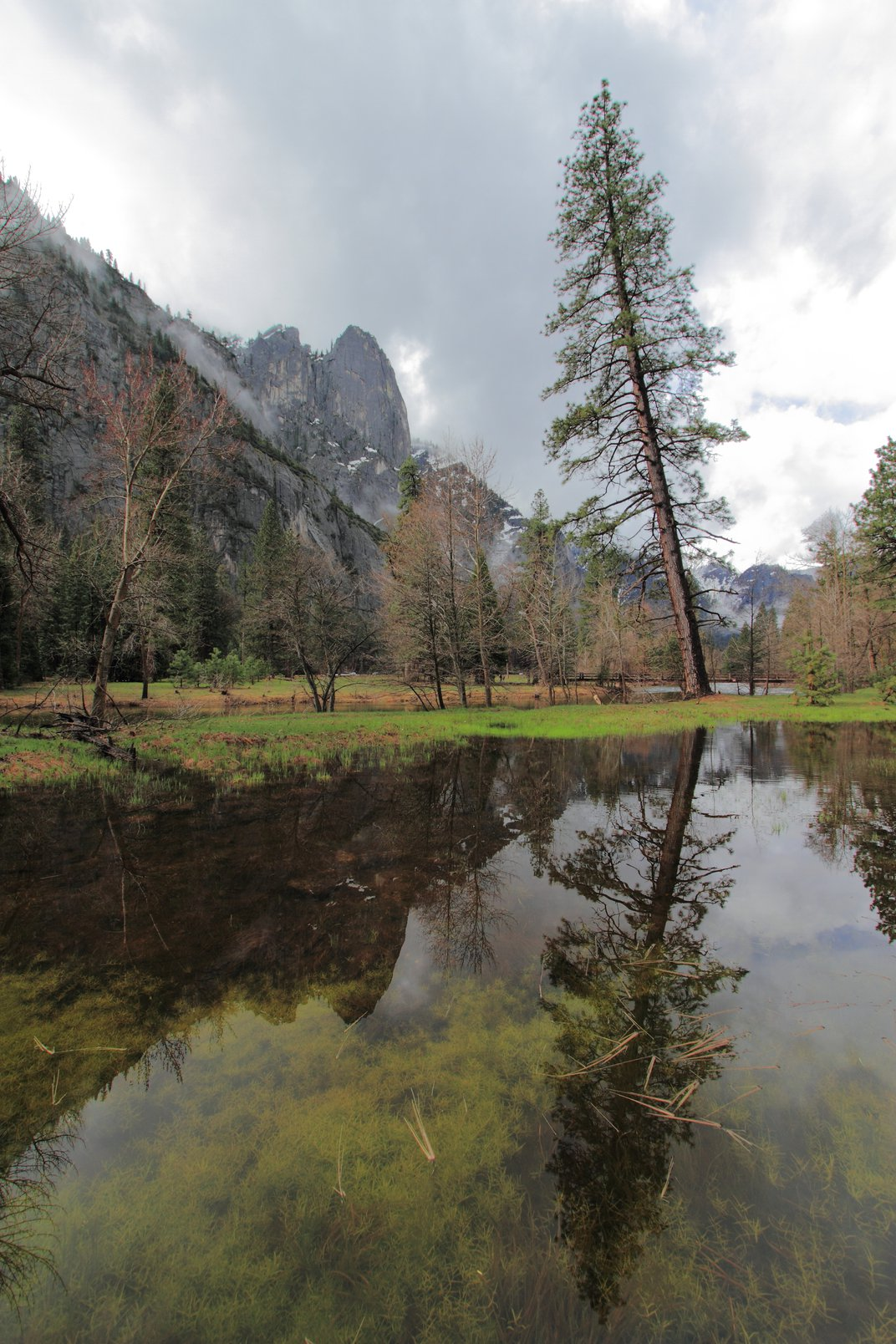 On a morning walk through the Yosemite valley I captured ...