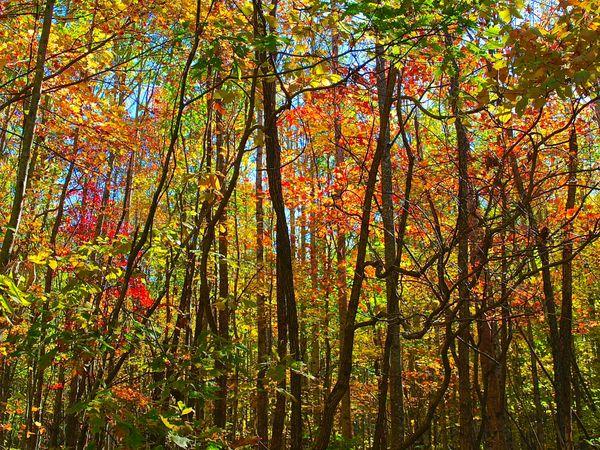 Wills Ridge Foliage #1 thumbnail