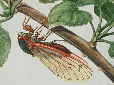 From Insects, their way and means of living.