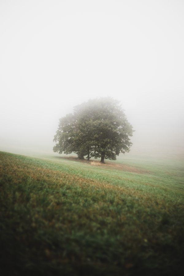 First Fog of September thumbnail