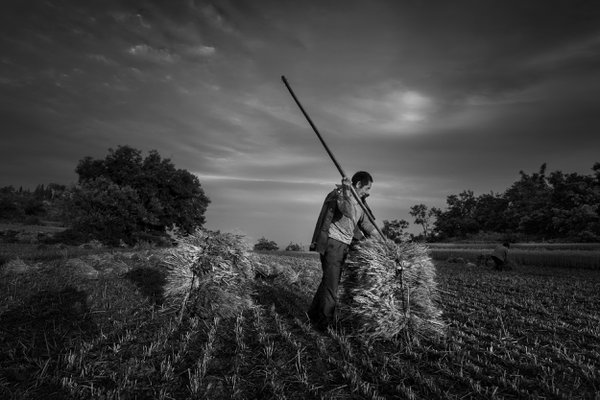 Wheat harvest in mountain village thumbnail