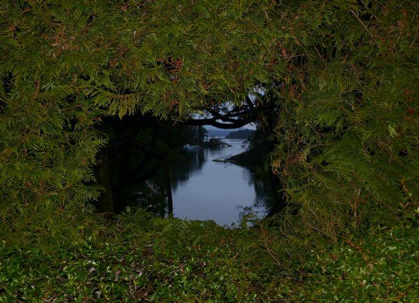 The River Through the Trees. thumbnail