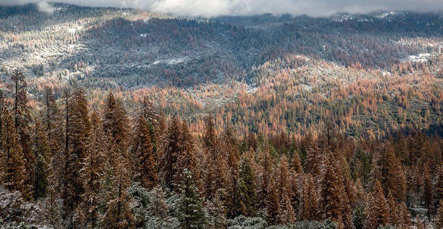 Dead Sierras