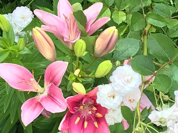 Roses and pink oriental lily thumbnail