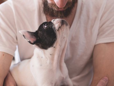 The gut flora of dogs and humans is incredibly similar, a new study finds.
