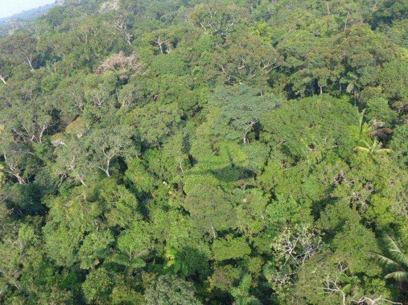 Putumayo Rainforest