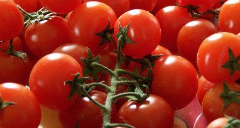 Pachino tomatos