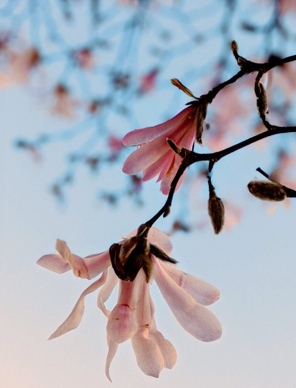Magnolia Moment thumbnail