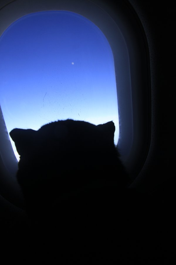 CAT VIEWS MOON FROM WINDOW SEAT thumbnail