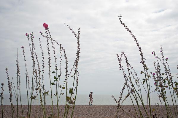 Between the reeds thumbnail