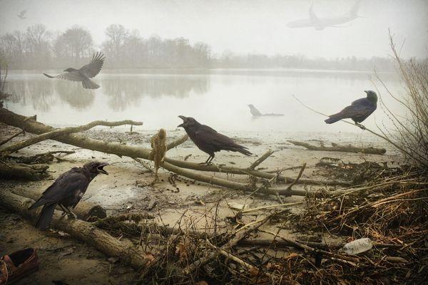 The Crows thumbnail