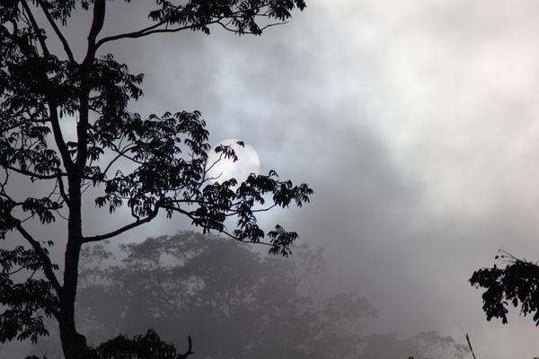 The sun breaking the amazon fog thumbnail