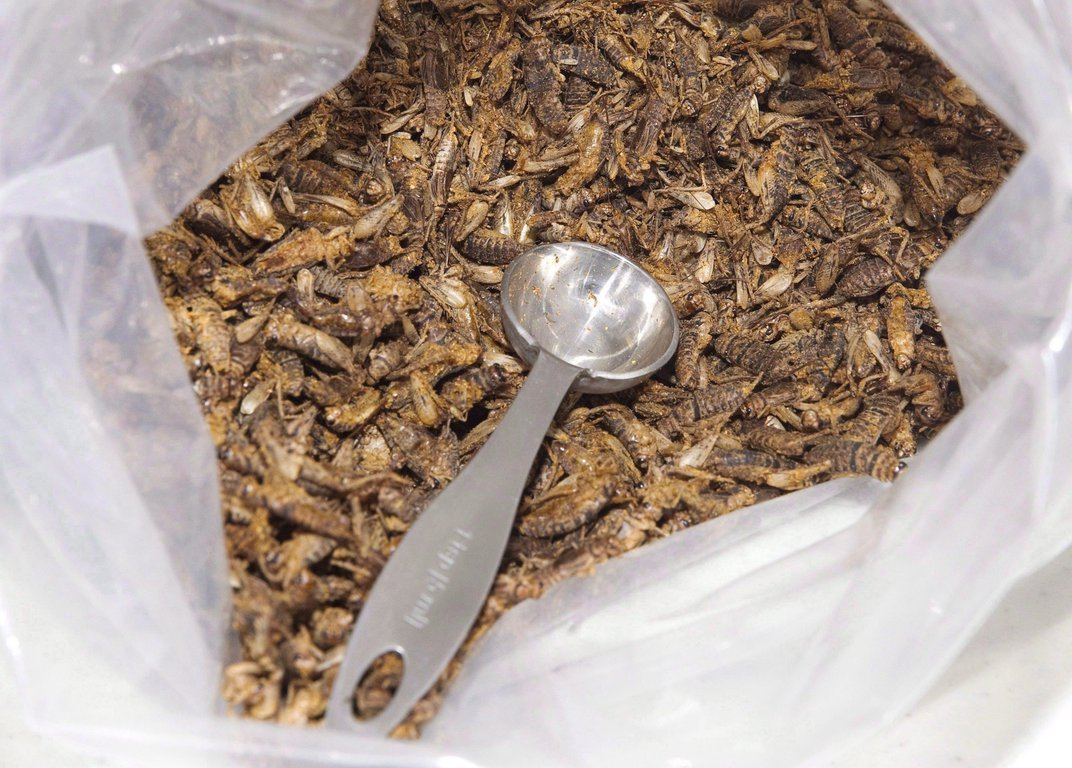 Why Canada Wants You to Know You're Eating Crickets