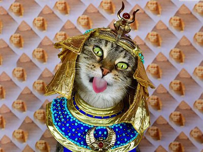 Writer and photographer Paul Koudounaris' new book, A Cat's Tale, finds his pet kitty, Baba, channeling famous and little-known felines from history.