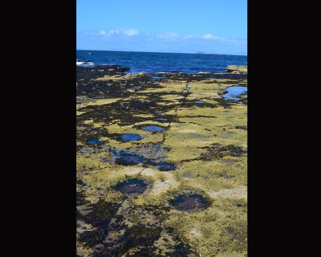 Tracks were made by sauropod dinosaurs on the Isle of Skye 170 million years ago. Via Steve Brusatte.