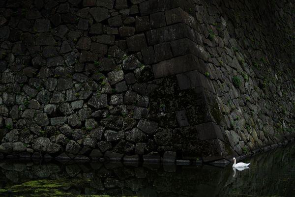 SWAN AND THE PALACE  thumbnail