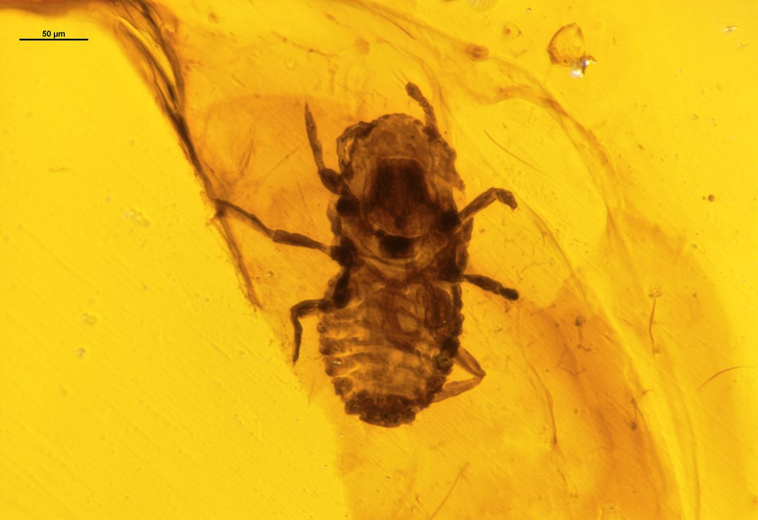 Lice-Filled Dinosaur Feathers Found Trapped in 100-Million-Year-Old Amber