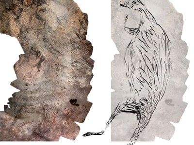 The kangaroo painting, shown alongside an illustration giving a clear view of the lines drawn by the artist, is Australia's oldest known rock art.