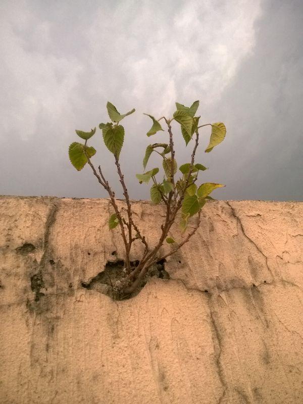 wall plant thumbnail