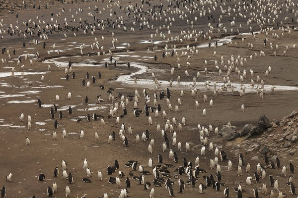 Penguins river thumbnail