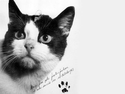 Félicette, a former stray who was sent into space by French researchers in 1963, now has a bronze statue in her honor at France's International Space University.