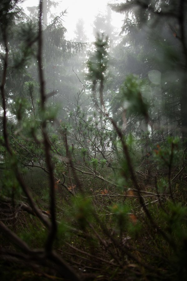 A view from the forest window thumbnail