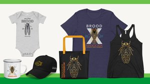 Preview thumbnail for Limited Edition Cicada Brood X Collection