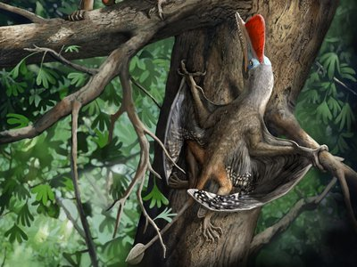 An artist's rendering of a newly described species of flying reptile named Kunpengopterus antipollicatus. The Jurassic-era pterosaur may be the earliest animal known to possess opposable thumbs.