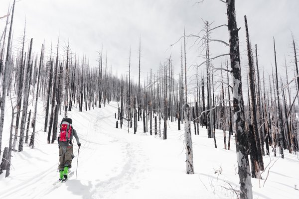 Burnt forest  in winter wonderland on Mt.Hood North thumbnail