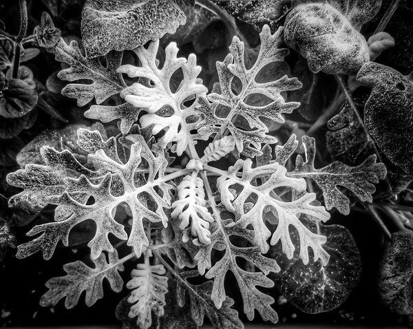 Plants from my Garden thumbnail