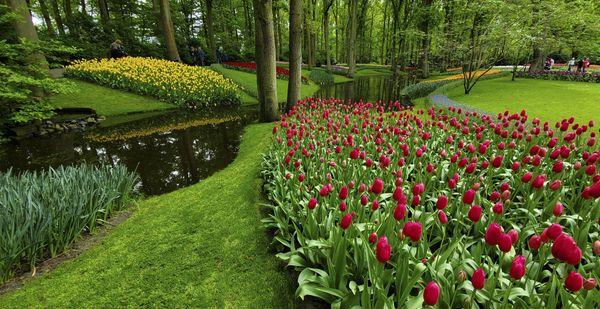 A Stream Running Through Keukenhof Gardens. thumbnail