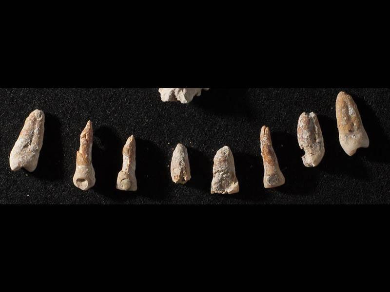 Maya elite teeth-edit.jpg