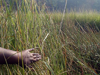 An actress dressed as Harriet Tubman reveals the wetlands along the Underground Railroad.